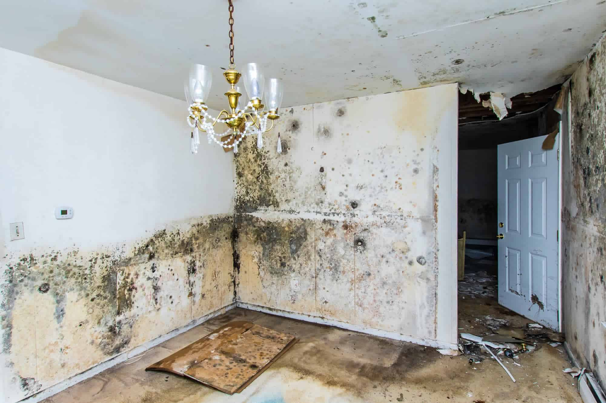 Mold remediation services by CleanMaster Services