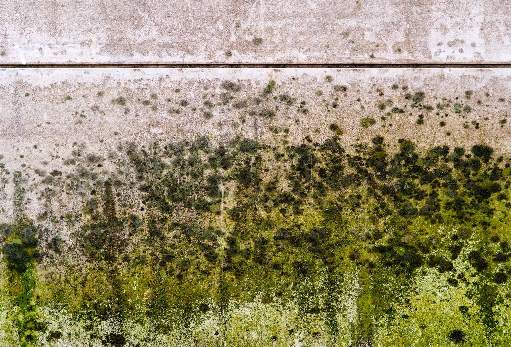 Got mold? CleanMaster Services certified technicians are experts at removing mold